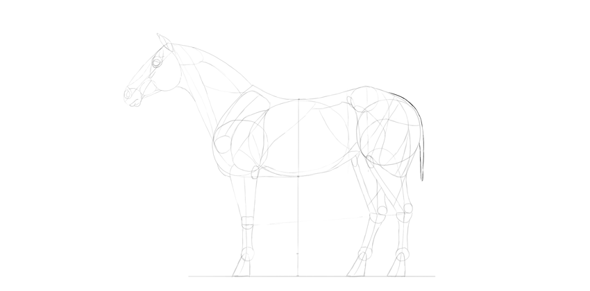 horse drawing tail