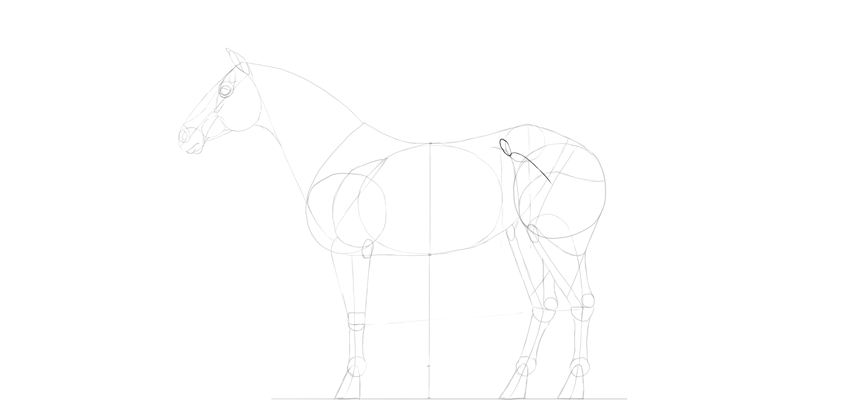 horse drawing hip bone