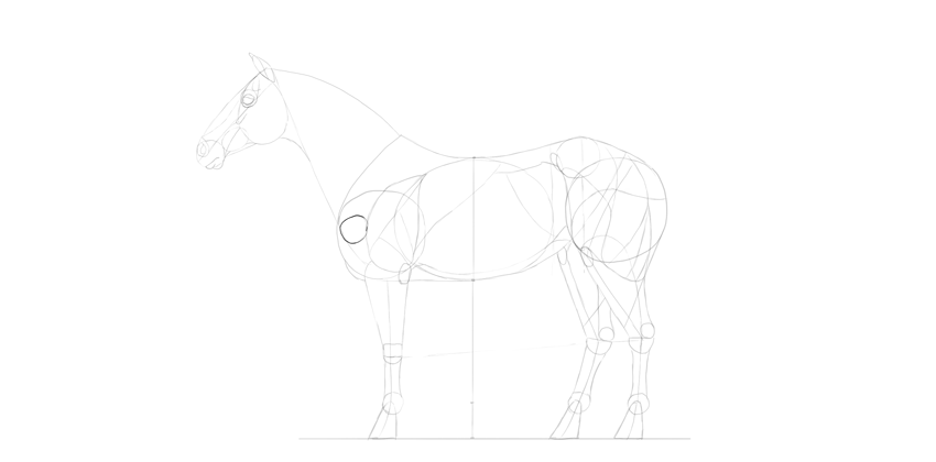 horse drawing shoulder bone