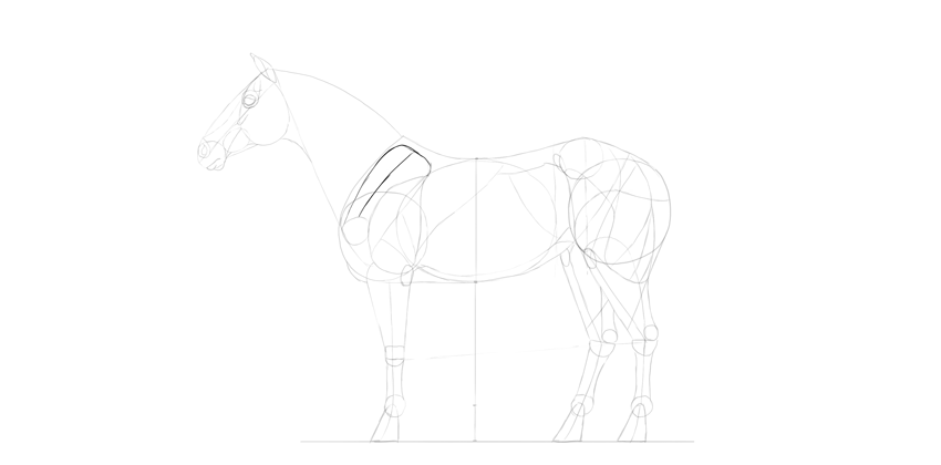 horse drawing shoudler blade