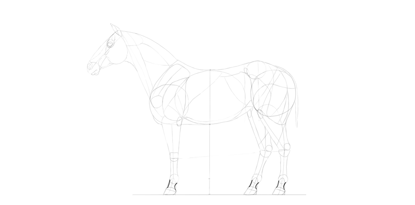 horse drawing hooves real shape