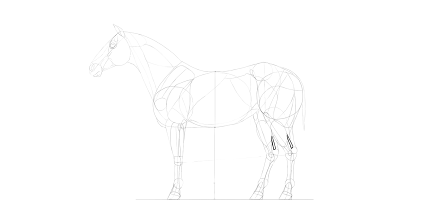 horse drawing tendons