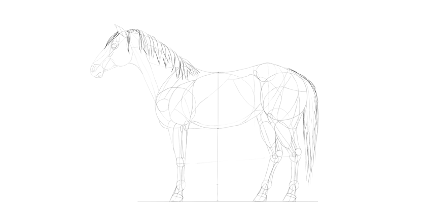 horse drawing mane tail
