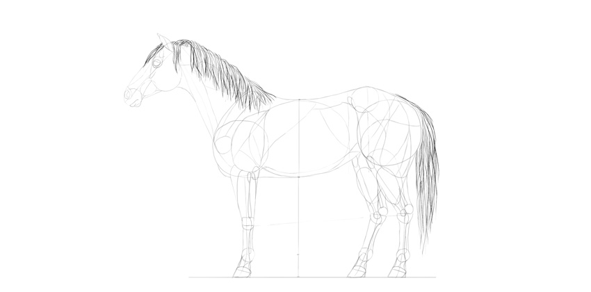 horse drawing mane tail shading