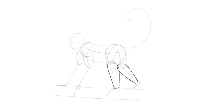 monkey drawing calves shape