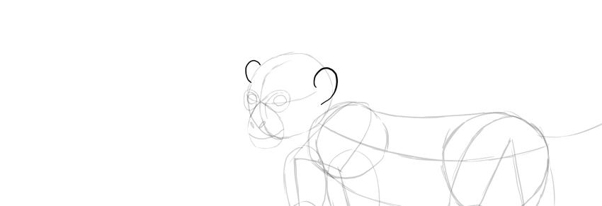 monkey drawing ears