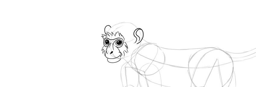 monkey drawing face fur