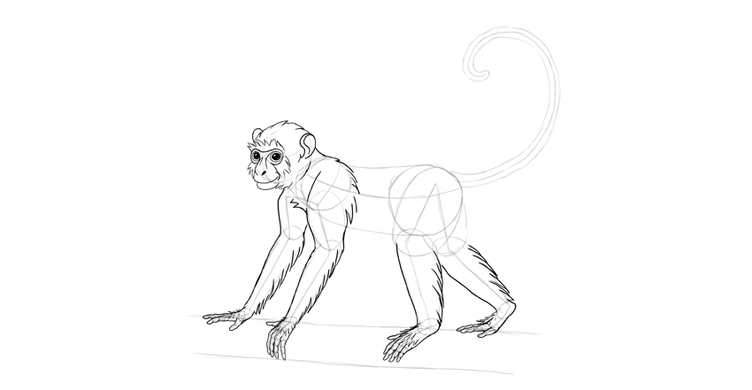monkey drawing shoudler fur