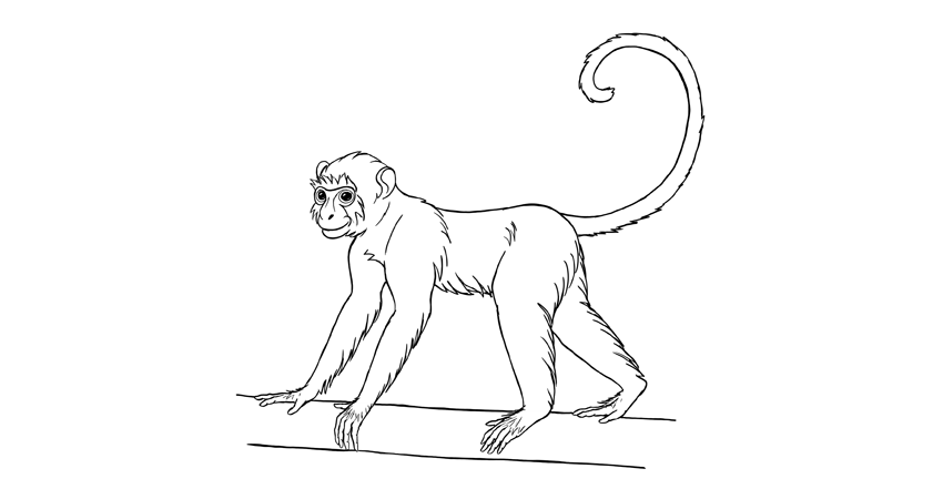 how to draw monkey step by step