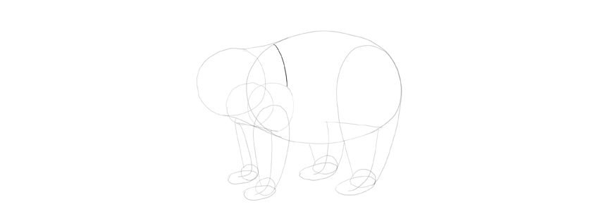 panda drawing shoulder line