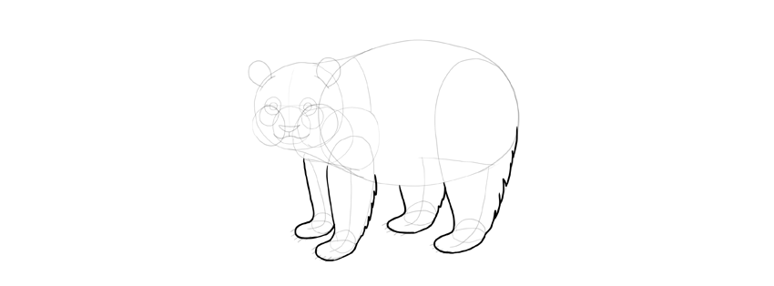 panda drawing fluffy legs