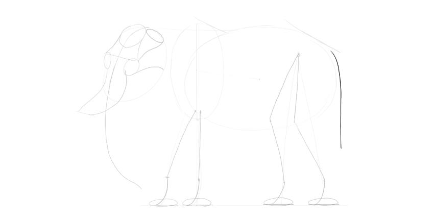 elephant tail
