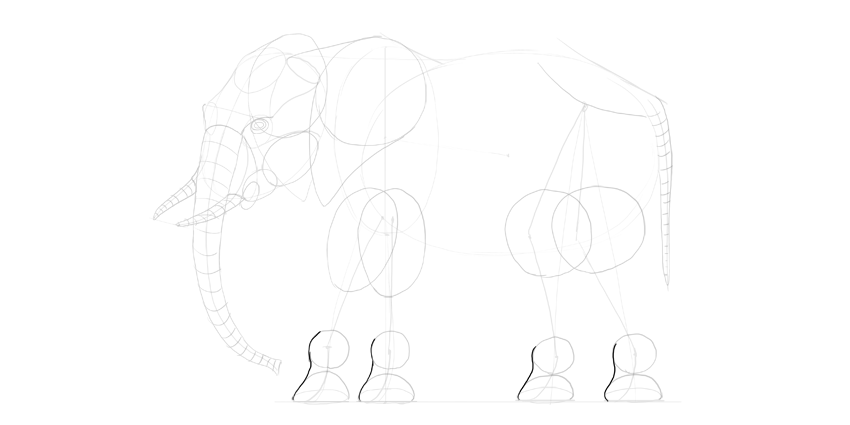 elephant legs front
