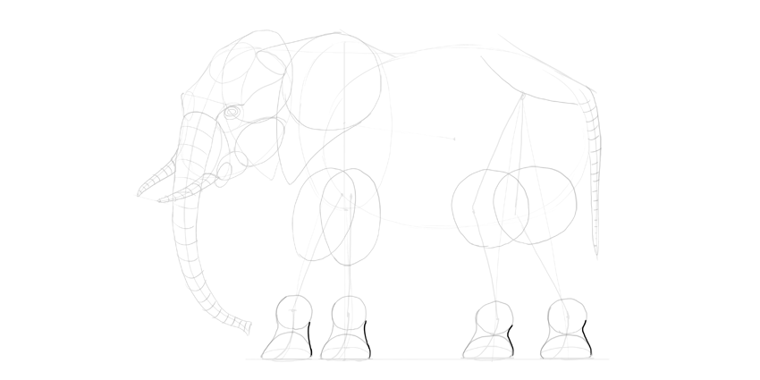 elephant legs back