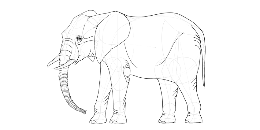 elephant full body