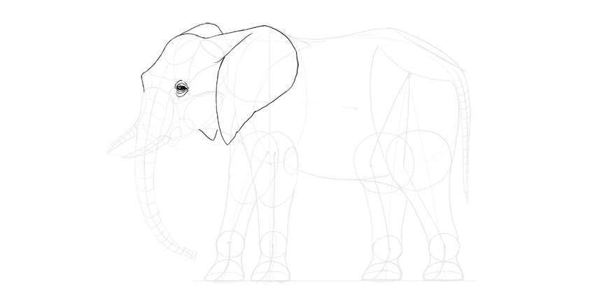 How to draw an elephant step by step elephant ear detail ccuart Image collections