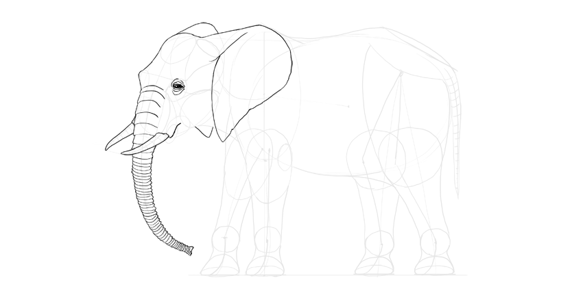 Line Drawing Elephant Face : How to draw an elephant step by themekeeper