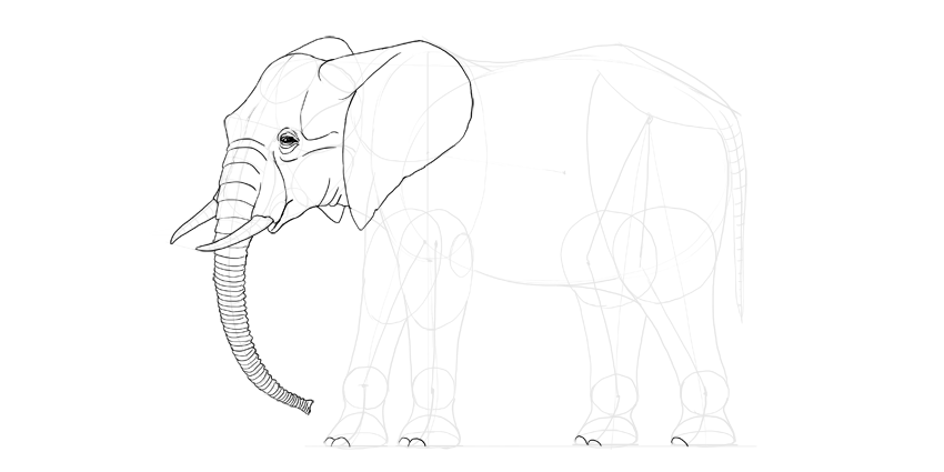 How to draw an elephant step by step elephant toenails ccuart Image collections