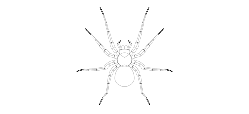 spider drawing leg tip
