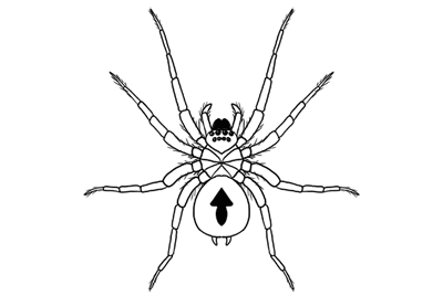 How to draw spider prev
