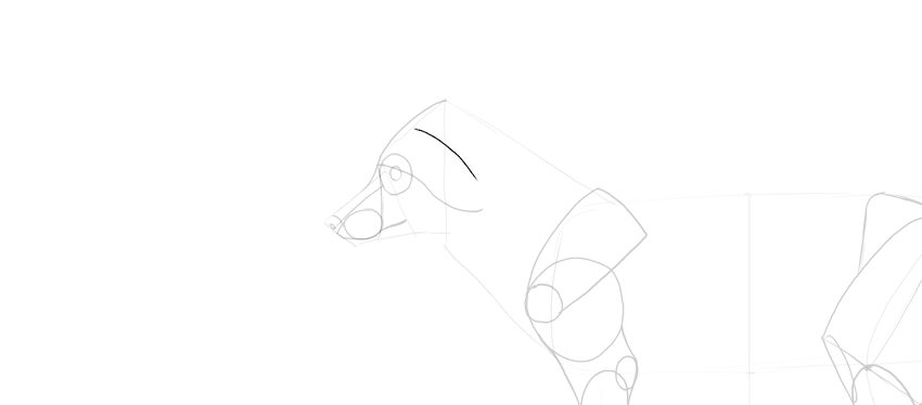 fox how to draw ears