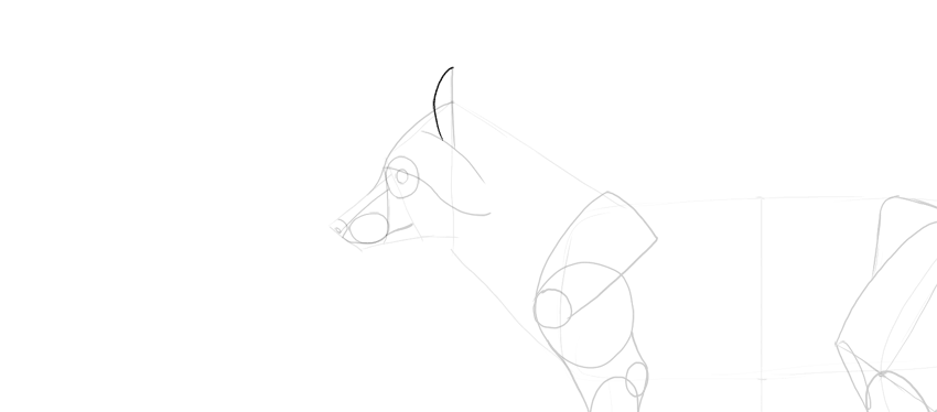 fox ear shape drawing