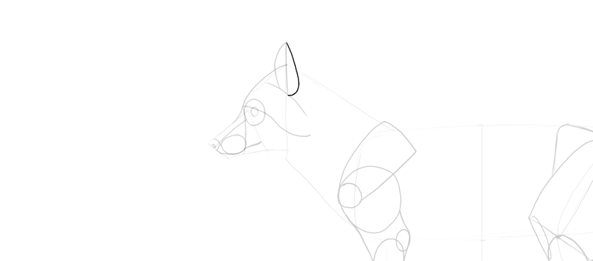 how to draw fox ear