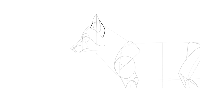 fox ear details drawing