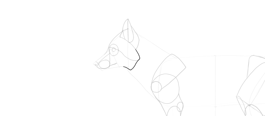 fox cheek mane drawing