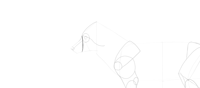 fox muzzle shape drawing