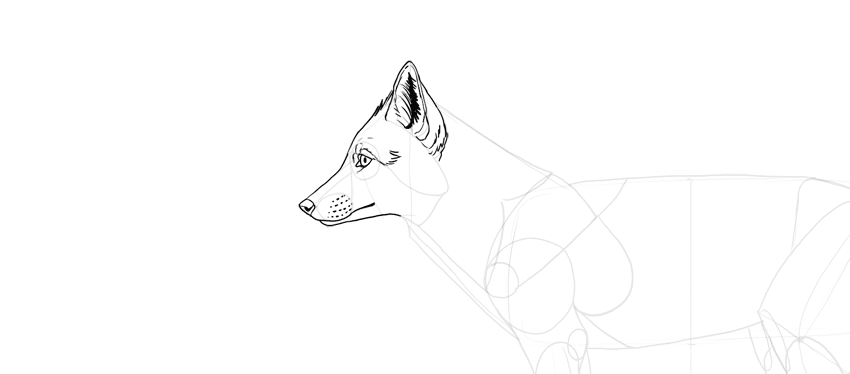 How to Draw a Fox StepbyStep