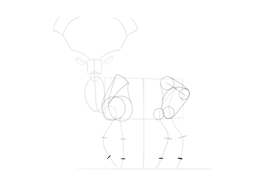 deer hooves proportions