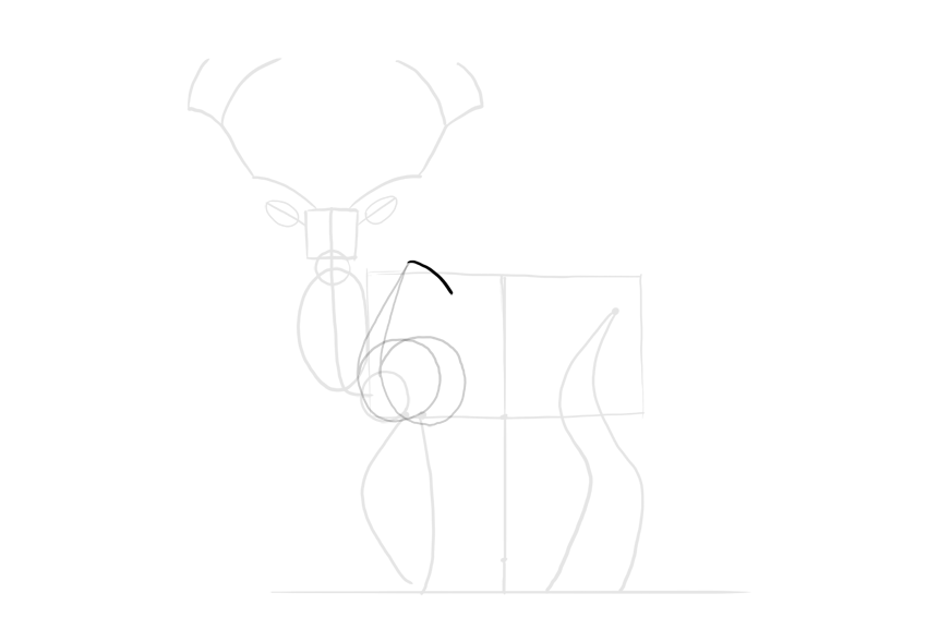 deer shoulder blade
