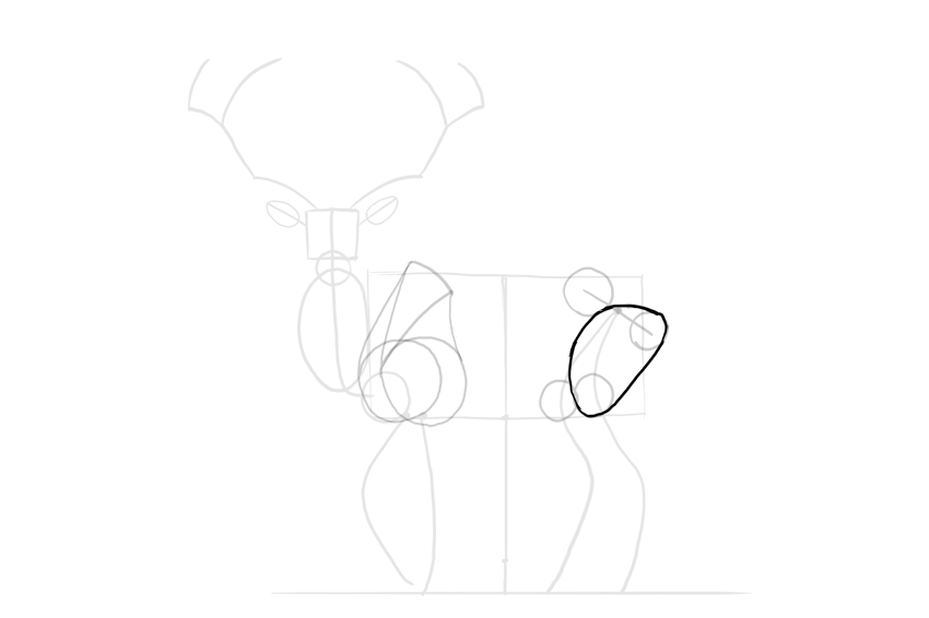 deer thigh shape
