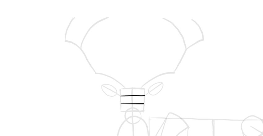 deer face proportions