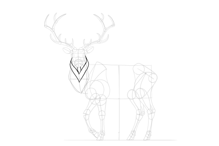 How to Draw a Deer Step by Step
