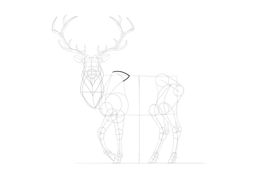 deer back hump