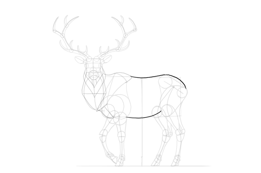 deer torso shape