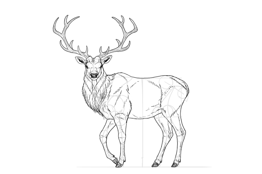 how to draw a detailed deer