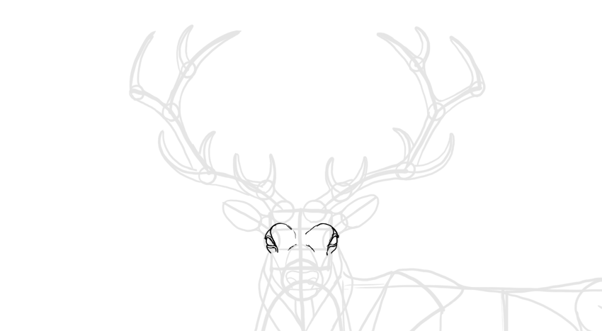 how to draw deer eyes