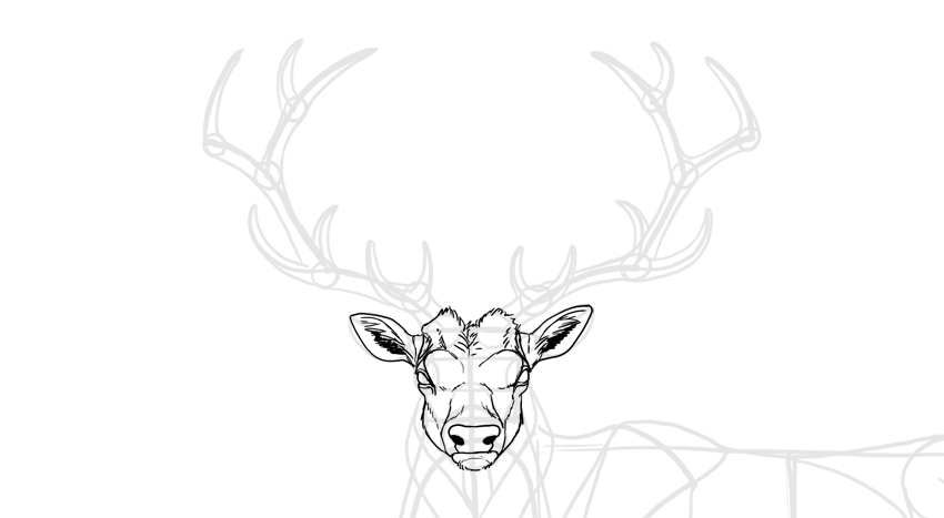 how to draw deer ears
