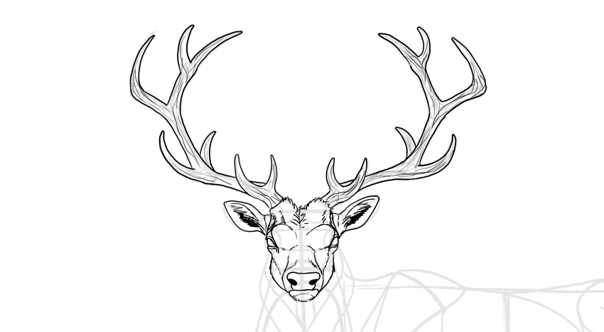 How to draw deer antlers