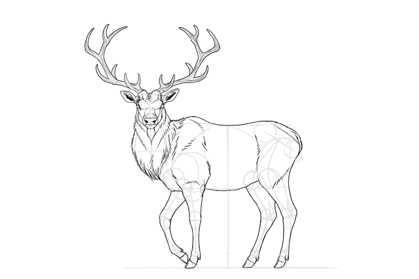 How To Draw Deer Silhouette