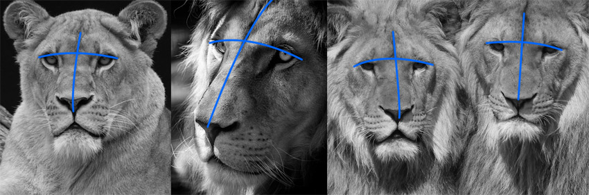 How To Draw Animal Eyes Mit dem bild blue eyed tiger von reinders erhalten sie ein prächtiges dekorationsobjekt an der wand. how to draw animal eyes