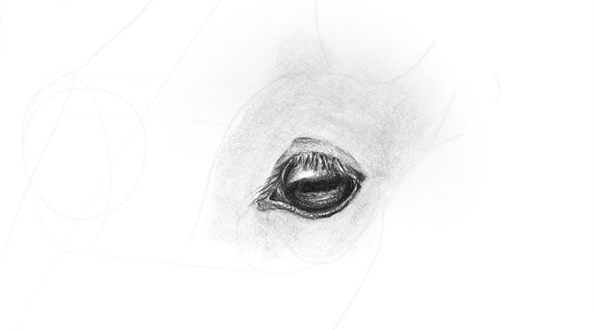 horse eye blending