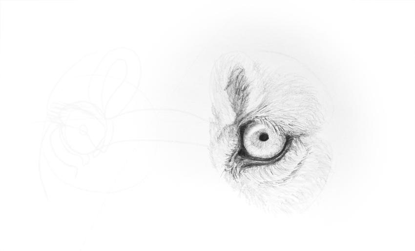 lion eye details