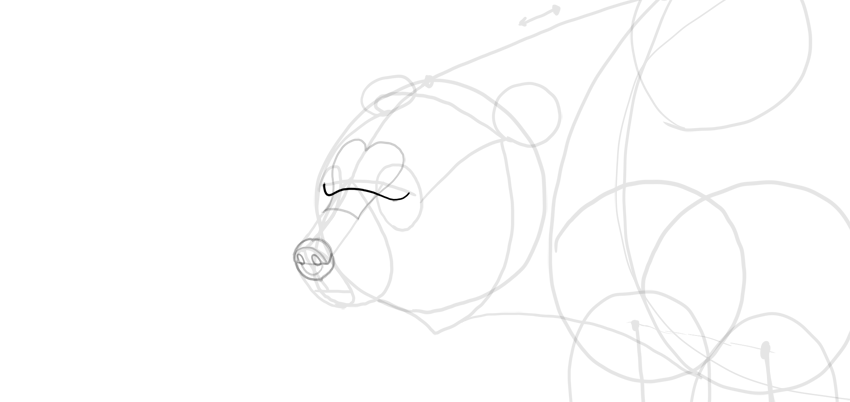bear drawing eye space