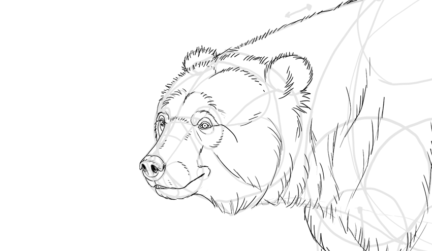 Bear drawing face fur