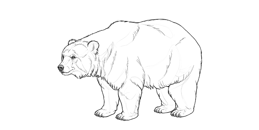 bear drawing plan shading