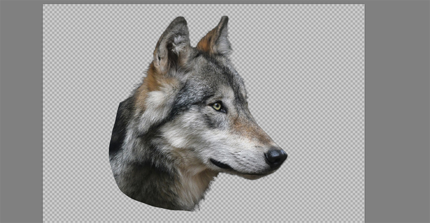cut wolf head from the background